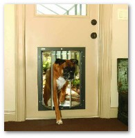 dog-doors-for-doors.jpg