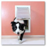 wall-mount-pet-door.jpg