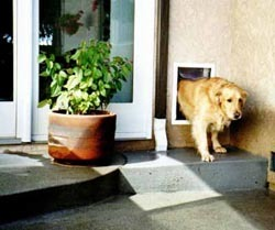 Perfect doggy door install for walls